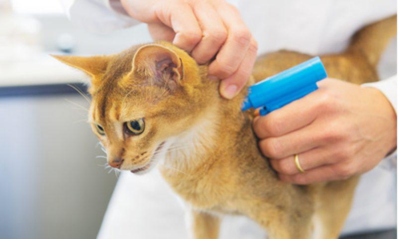 gatto obbligatorio microchip lombardia