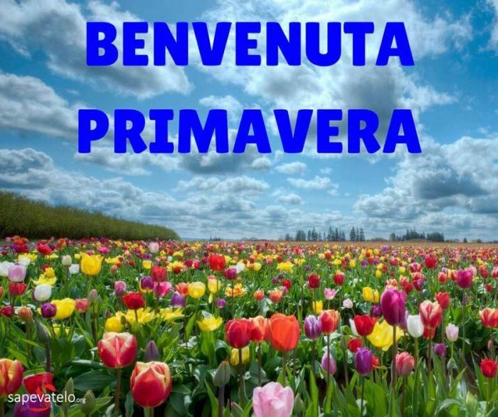 primavera oggi