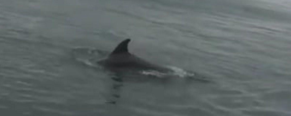 delfini porto salerno bufala