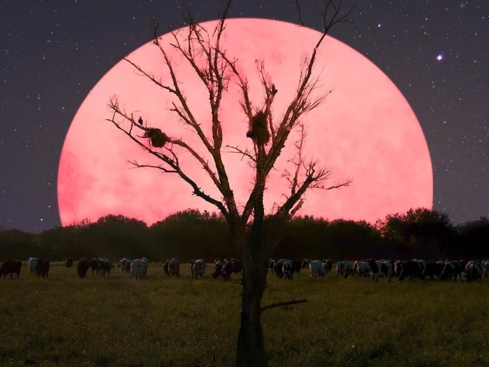 superluna 8 aprile