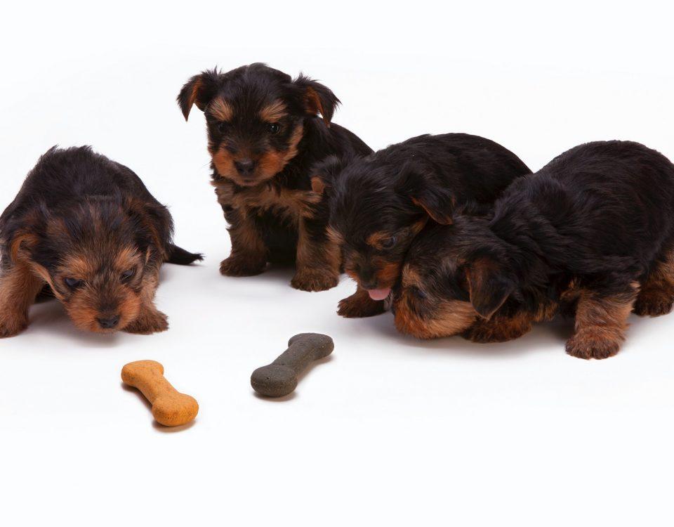 croccantini cani
