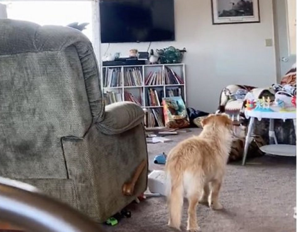 Alaska sisma video