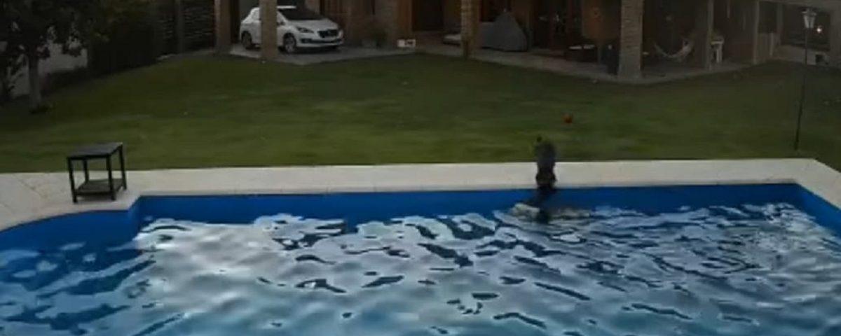 cucciola salva cane