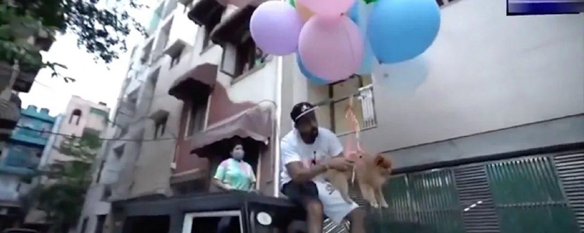 cane palloncini India